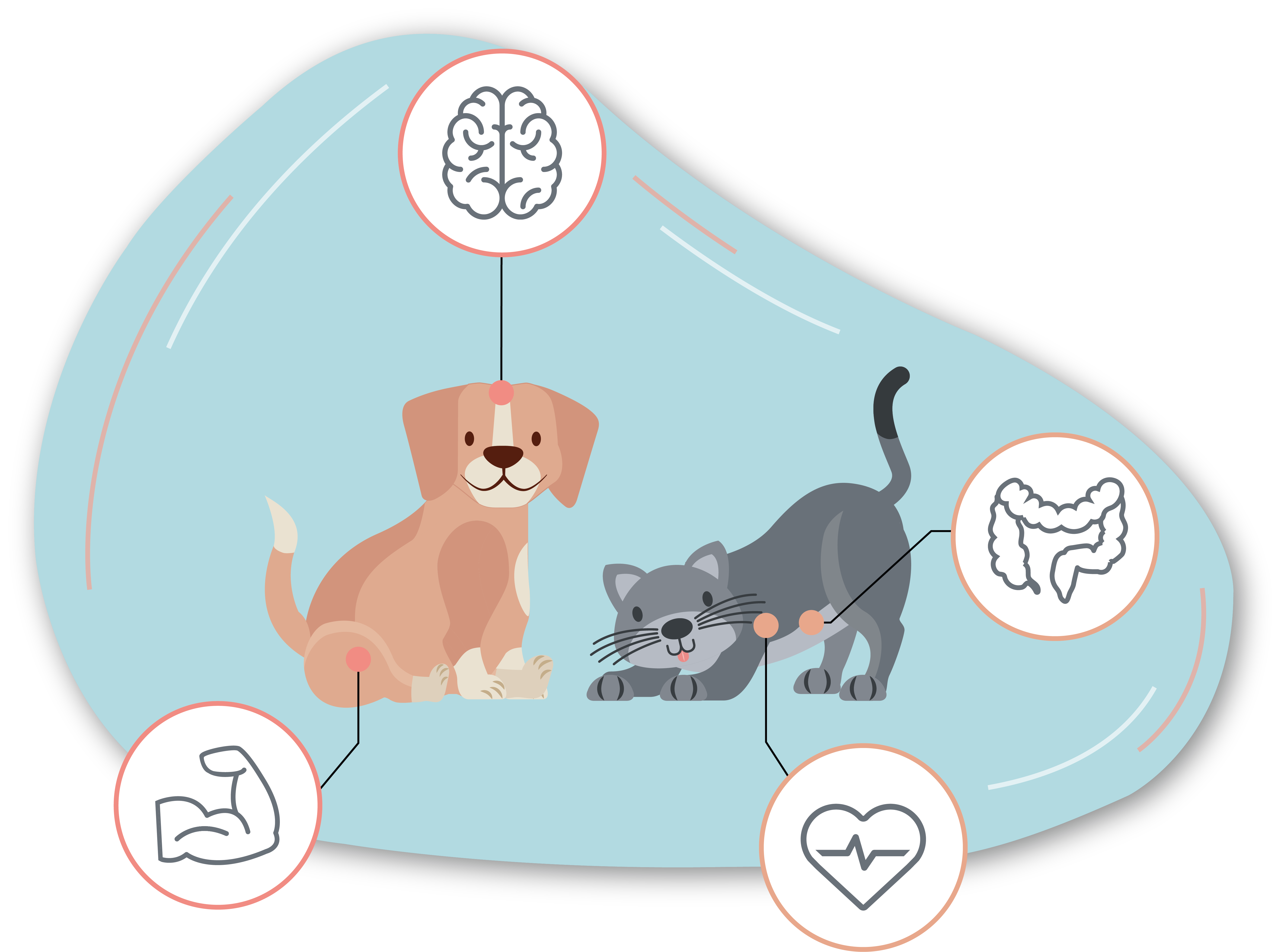 Illustration chien et chat by Hawkcell
